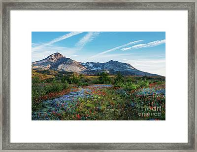 Mount St Helens Glorious Field Of Spring Wildflowers Framed Print by Mike Reid