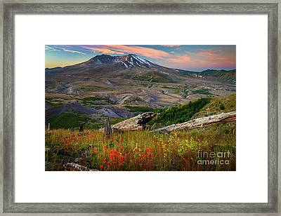 Mount St Helens Paintbrush Framed Print by Inge Johnsson