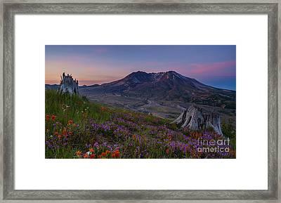 Mount St Helens Spring Colors Framed Print by Mike Reid