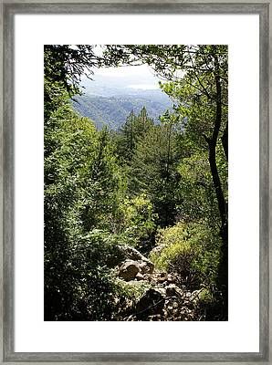 Mount Tamalpais Forest View Framed Print by Ben Upham III