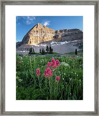Mount Timpanogos Wildflowers Framed Print