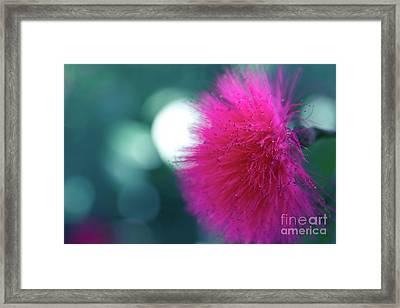 Mountain Apple - Ohia Ai - Syzygium Malaccense Framed Print by Sharon Mau