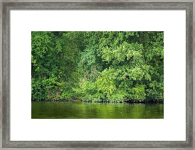 Framed Print featuring the photograph Mountain Ash With Berries by Alexander Kunz