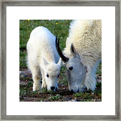 Mountain Baby Framed Print