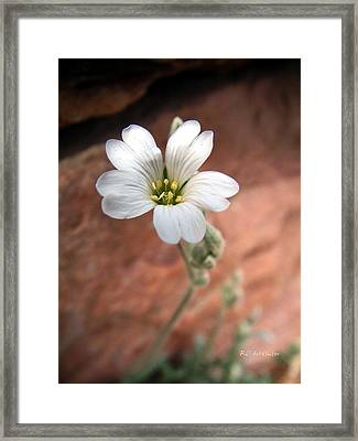 Framed Print featuring the photograph Mountain Beauty by RC DeWinter