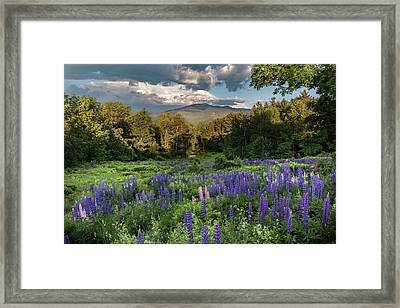Mountain Blooms Framed Print by Bill Wakeley