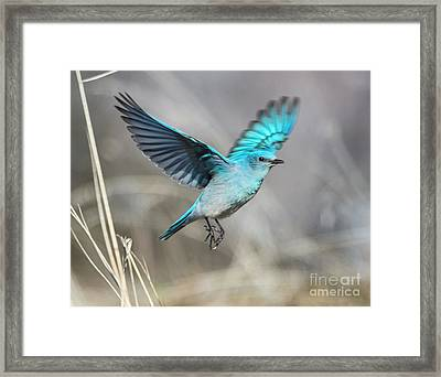 Mountain Blue Framed Print by Mike Dawson
