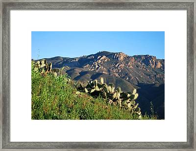Framed Print featuring the photograph Mountain Cactus View - Santa Monica Mountains by Matt Harang