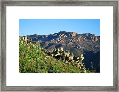 Mountain Cactus View - Santa Monica Mountains Framed Print