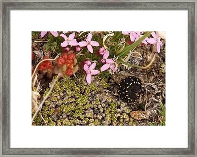 Mountain Catapillar.. Framed Print by Al  Swasey