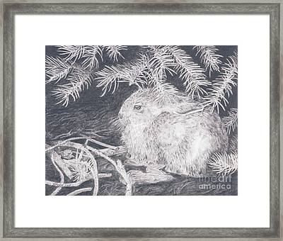 Mountain Cottontail Framed Print