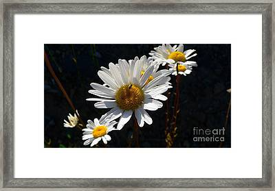 Framed Print featuring the photograph Mountain Daisy by Larry Keahey