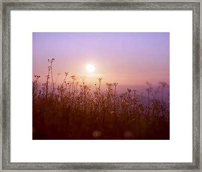 Mountain Flower Rising Framed Print by Benjamin Garvey