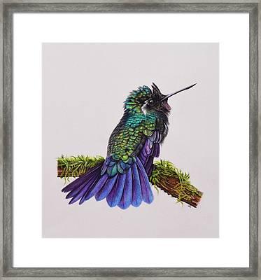 Mountain Gem Hummingbird Framed Print