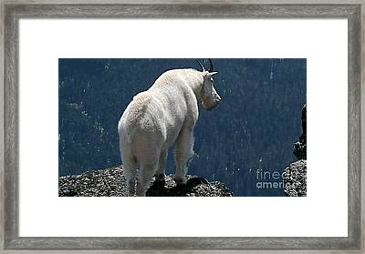Mountain Goat 2 Framed Print
