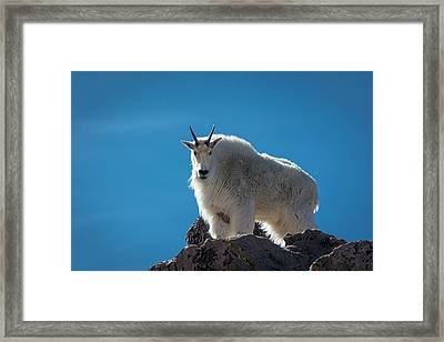 Framed Print featuring the photograph Mountain Goat 3 by Gary Lengyel