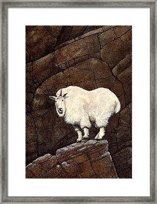 Mountain Goat Framed Print by Frank Wilson