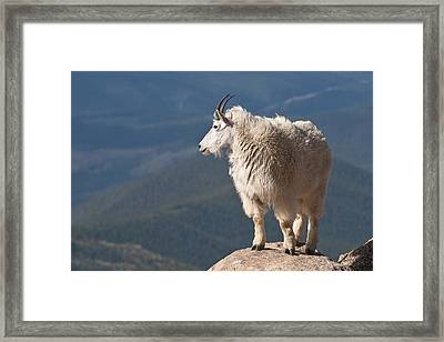 Framed Print featuring the photograph Mountain Goat by Gary Lengyel