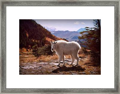 Mountain Goat Framed Print by Patricia Montgomery