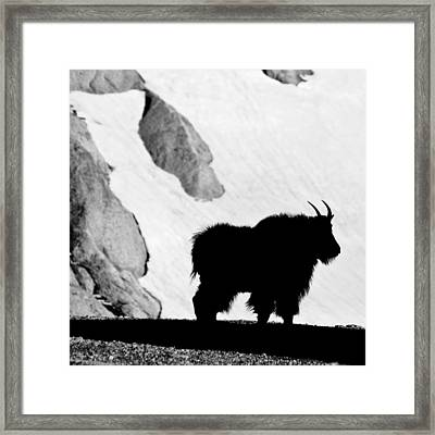 Mountain Goat Shadow Framed Print
