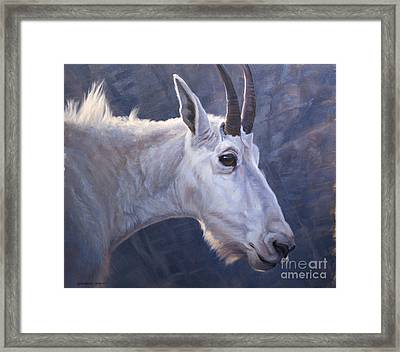 Mountain Goat Study Framed Print by Michelle Grant