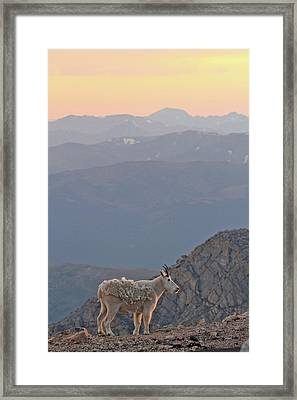 Framed Print featuring the photograph Mountain Goat Sunset by Scott Mahon