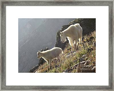 Mountain Goats Framed Print by Andrew Terrill