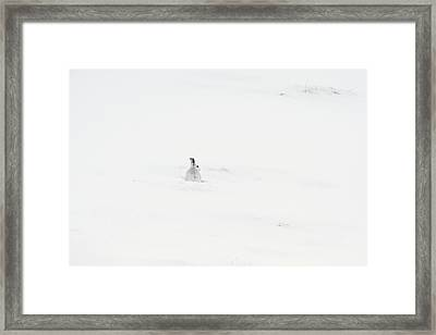 Mountain Hare Small In Frame Left Framed Print