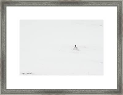 Mountain Hare Small In Frame Right Framed Print