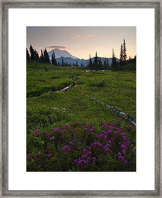 Mountain Heather Sunset Framed Print by Mike  Dawson