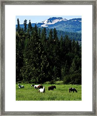 Mountain Herd Framed Print