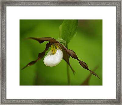 Framed Print featuring the photograph Mountain Lady's Slipper by Ben Upham III