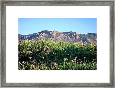 Framed Print featuring the photograph Mountain Landscape View - Purple Flowers by Matt Harang