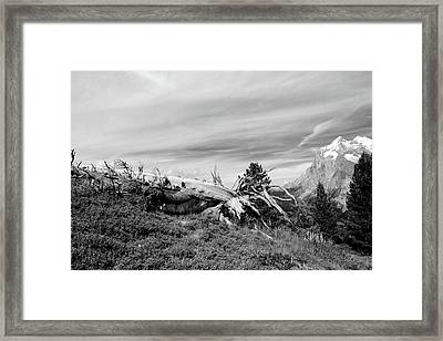 Mountain Landscape With Fallen Tree And View At Alps In Switzerland Framed Print
