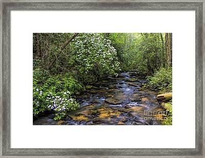 Mountain Laurels Light Up Panther Creek Framed Print