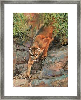 Mountain Lion 2 Framed Print by David Stribbling