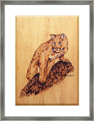 Mountain Lion Framed Print by Ron Haist
