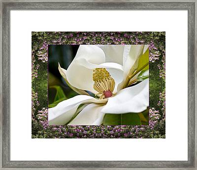 Mountain Magnolia Framed Print