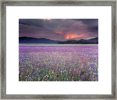 Mountain Meadow Purple Framed Print by Leland D Howard