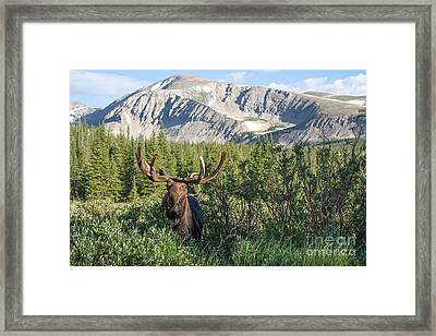 Mountain Moose Framed Print