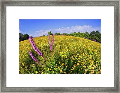 Framed Print featuring the photograph Mountain Of Summer Flowers In The Blue Ridge by Dan Carmichael