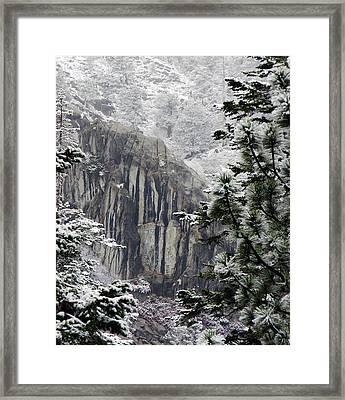Mountain Pine IIi Framed Print by D Kadah Tanaka