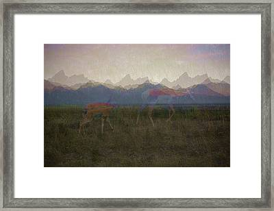Mountain Pronghorns Framed Print