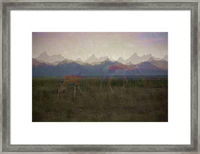 Mountain Pronghorns Framed Print