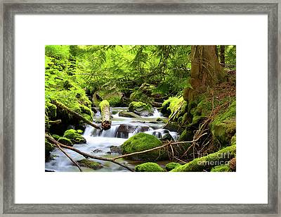Mountain Stream In The Pacific Northwest Framed Print