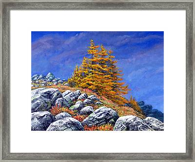 Mountain Tamaracks Framed Print by Frank Wilson