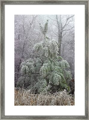 Mountain Top Frost Framed Print by Mike Eingle