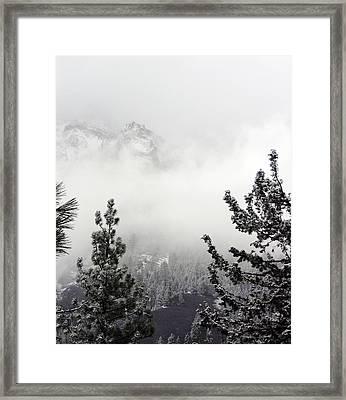 Mountain Top Pine Iv Framed Print by D Kadah Tanaka