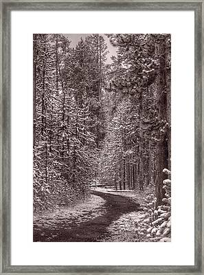 Mountain Trail Yellowstone Bw Framed Print