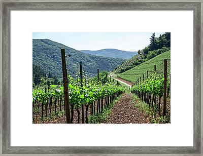 Mountain Vineyard Framed Print